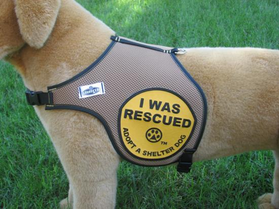 I Was Rescued Harness